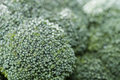 Broccoli Macro Shot