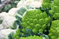 Broccoli romanesco cauliflower vegetables a a kind of in the foreground with the background out of focus other Royalty Free Stock Photos