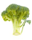 Broccoli stalk on white background Stock Images