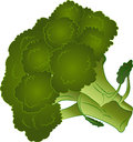 Broccoli Vector Illustration Royalty Free Stock Photo