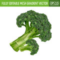 Broccoli on white background. Vector illustration Royalty Free Stock Photo