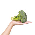 Broccoli in a woman s hand isolated on white Stock Photos