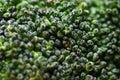 Broccolo Fotografia Stock