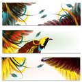 Brochures set with feathers Royalty Free Stock Photo