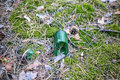 Beer bottle on the ground in the pine forest. Royalty Free Stock Photo
