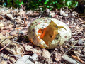 Broken bird egg a wild on the forest floor Royalty Free Stock Photography