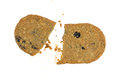 Broken blueberry wafer cookie with crumbs Royalty Free Stock Photo