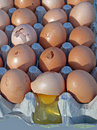 Broken eggs Stock Images