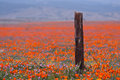 Broken fence and wild flowers near antelope valley california poppy reserved in early spring Stock Photography