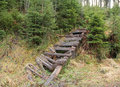 Broken gangplank wooden in the spruce forest Stock Photography