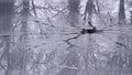Broken ice recflecting trees Royalty Free Stock Photo
