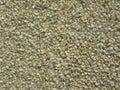 Broken Pearl millet Royalty Free Stock Photo