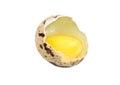 Broken quail egg Royalty Free Stock Photo