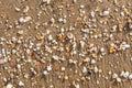 Broken sea shells on tropical beach sand.