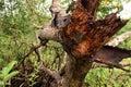 Broken Tree Branch. Textures, ...