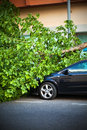 Broken tree on a car after a wind storm disaster Royalty Free Stock Photo