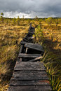 Broken walkway in a marsh in Estonia Royalty Free Stock Images