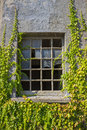 Broken window with vines in an old factory around Stock Images