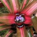Bromeliad costa rica puerto viejo de talamanca Royalty Free Stock Images
