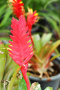 Bromeliad Flowers In The Nature