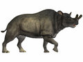 Brontotherium on white is an extinct rhinoceros like herbivore that is related to horses fossils have been found in north america Stock Photo
