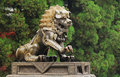Bronze lion Stock Images