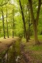 Brook between trees Stock Images