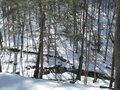 Brook view from snowy woods trail Royalty Free Stock Photo