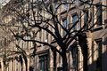 Brooklyn Brownstones Stock Images