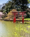 stock image of  Brooklyn NY / United States - APril 17, 2019: a vertical view of the peaceful Japanese Hill-and-Pond Garden of the Brooklyn