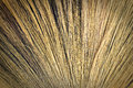 Broom background made ​​of grass to tie together Stock Image