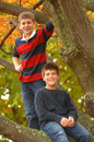 Brothers In A Tree Royalty Free Stock Photography