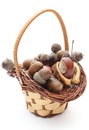 Brown acorns and chestnut in wicker basket on white background stack of isolated Royalty Free Stock Photo