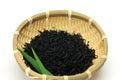 Brown alga Stock Images