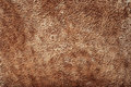 Brown Animal Skin Texture Royalty Free Stock Photo