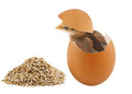Brown baby chick inside egg Royalty Free Stock Photo
