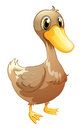 A brown baby duck illustration of on white background Stock Image