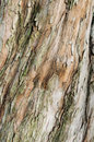 Brown bark of a tree Royalty Free Stock Images