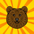 Brown bear portrait wild animal. Vector illustration on comic