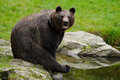Brown bear, Ursus arctos, sitting on the stone, near the water pond Royalty Free Stock Photo
