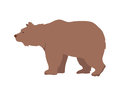 Brown Bear Vector Illustration in Flat Design