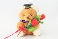 Brown bear wearing a graduation cap and red roses. Royalty Free Stock Photo