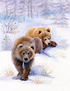 Brown bears in the snow Royalty Free Stock Images