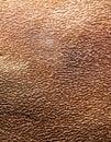Brown beech bark inside closeup Royalty Free Stock Photo