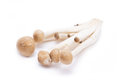 Brown beech mushrooms hypsizygus marmoreus isolated on white backgroiund Royalty Free Stock Photo