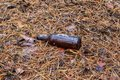 Brown beer bottle on the ground in the pine forest Royalty Free Stock Photo