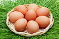 Brown chicken egg in a wicker basket Stock Photo