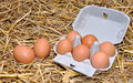 Brown chicken eggs in box with straw background Stock Images