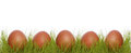 Brown chicken eggs grass white background Royalty Free Stock Photography