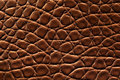 Brown crocodile leather Stock Photography